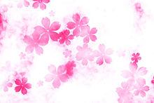 桜*❀の画像(プリ画像)