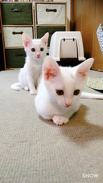 ネコ様の画像(プリ画像)
