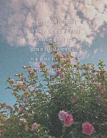 flower road     歌詞の画像(Roadに関連した画像)