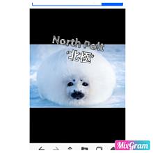 北極の画像(北極に関連した画像)