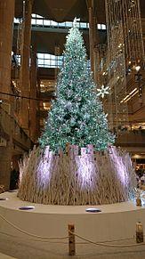 クリスマスツリーの画像(クリスマスツリーに関連した画像)