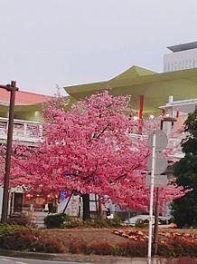 桜の画像(桜に関連した画像)