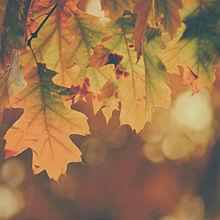 秋/素材/加工の画像(カフェに関連した画像)