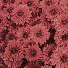 花/カラフル/素材の画像(かわいい 素材に関連した画像)
