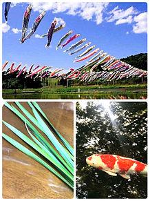 鯉のぼり、菖蒲の葉、錦鯉 端午の節句 きれいの画像(錦鯉に関連した画像)