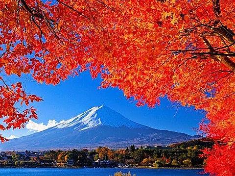 富士山と紅葉の画像(プリ画像)