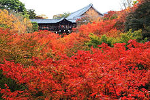 美しい京都の紅葉の名所 家庭画報の画像(京都に関連した画像)