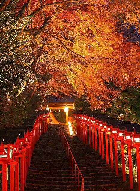 夜の美しい紅葉の画像(プリ画像)