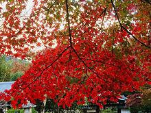 京都の美しい紅葉の画像(プリ画像)