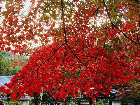 京都の美しい紅葉
