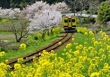 桜と菜の花  ハートのいいねを押してねの画像(プリ画像)