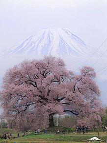 桜と富士山  ハートのいいねを押してねの画像(富士山に関連した画像)