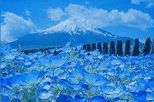 富士山とネモフィラ  ハートいいねを押してね!の画像(フィラに関連した画像)