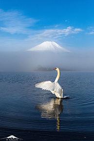 富士山と白鳥 山中湖  ハートのいいねを押してね!の画像(富士山に関連した画像)