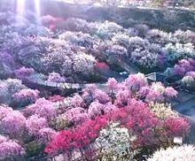 三重県 いなべ市農業公園 写真右下のハートを押してねの画像(三重に関連した画像)