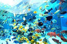 沖縄県  美ら海水族館とその周辺  写真右下のハートを押してねの画像(水族館に関連した画像)