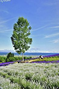 ラベンダー畑  北海道  写真右下のハートを押してねの画像(北海道に関連した画像)