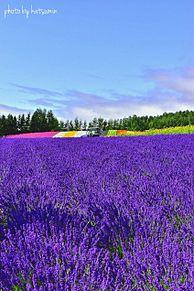 北海道  ラベンダー畑  写真右下のハートを押してねの画像(ラベンダーに関連した画像)