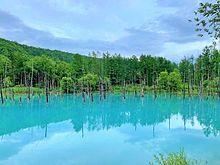北海道 美瑛  白金 青い池  写真右下のハートを押してねの画像(北海道に関連した画像)