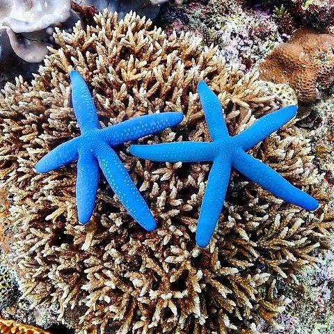 沖縄県  珊瑚植樹  写真右下のハートを押してねの画像 プリ画像