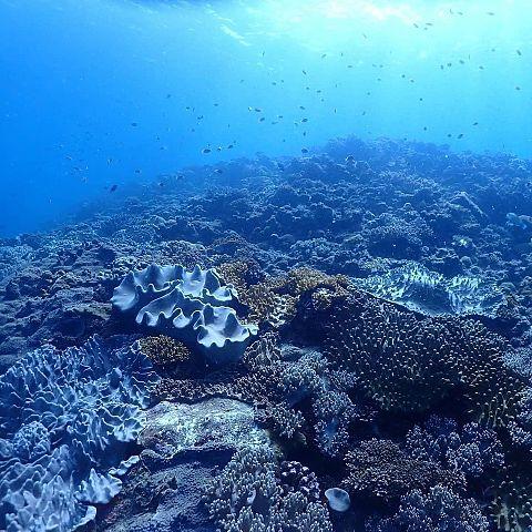 沖縄県  珊瑚植樹  写真右下のハートを押してねの画像(プリ画像)