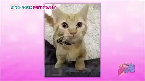 ちーちゃんの画像(プリ画像)