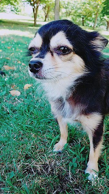 愛犬 💓モカ💓の画像(プリ画像)