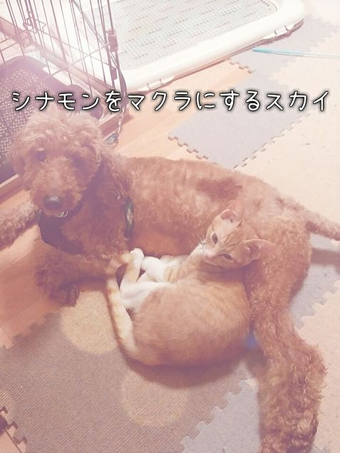 うちの猫・犬の画像(プリ画像)