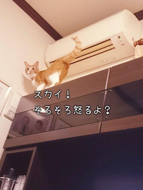 うちの猫の画像(プリ画像)