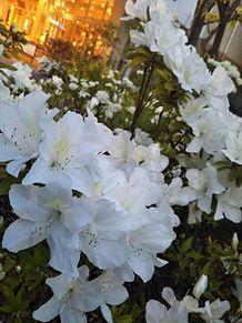 花の画像(ららぽーとに関連した画像)