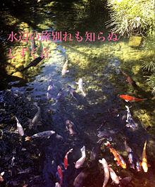 鯉の池 プリ画像