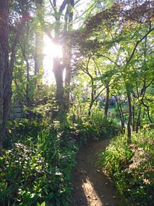 森の光輪 プリ画像