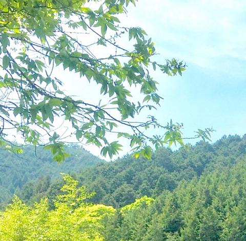 涼やかな渓谷の一幕の画像 プリ画像