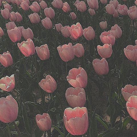 花⸜🌷︎⸝の画像(プリ画像)