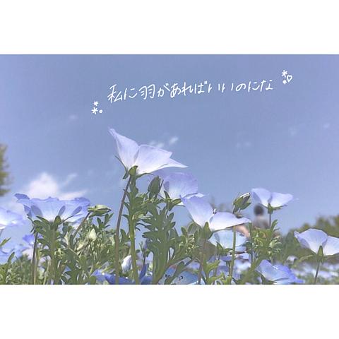 __068の画像(プリ画像)