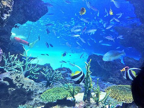 水族館の画像(プリ画像)