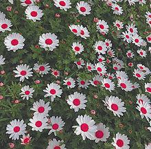 保存はいいねの画像(花畑に関連した画像)