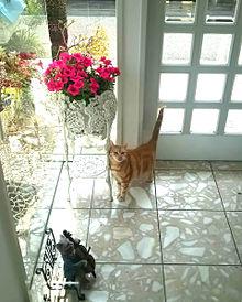 猫と花 おしゃれの画像(猫 おしゃれに関連した画像)