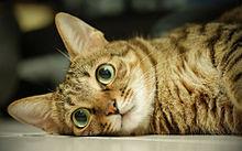 かわいい猫 おしゃれの画像(猫 おしゃれに関連した画像)