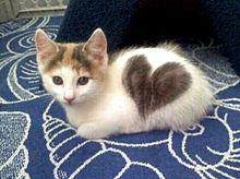 ハート毛柄の子猫 かわいい プリ画像