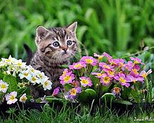 かわいい子猫 プリ画像