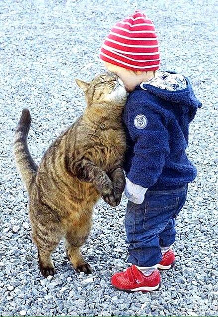 赤ちゃんと猫のハグ かわいいの画像 プリ画像