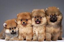かわいい子犬 プリ画像