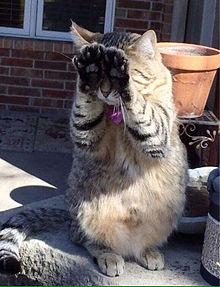 猫 ごめんちゃい かわいい プリ画像