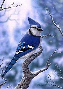 青い鳥 プリ画像