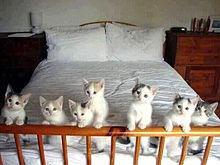 かわいい子猫たち プリ画像