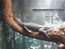 天王寺動物園 大阪 プリ画像