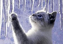 猫と氷柱 つらら プリ画像