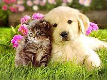 かわいい子猫と仔犬 プリ画像