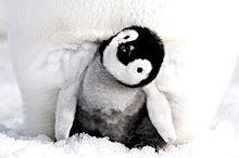 ペンギンの親子 かわいいの画像(親に関連した画像)